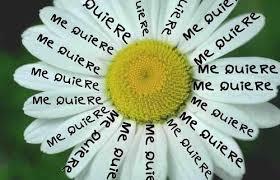 Floriografía ¡Las floreshablan!